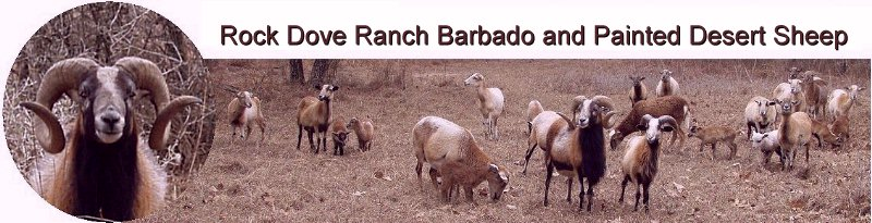 Rock Dove Ranch Barbado and Painted Desert Sheep and trophy rams